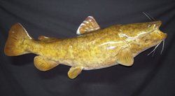 fish reproduction northern pike