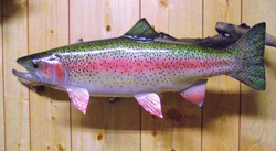 Rainbow Trout fish replica