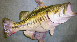 replica Lake Fork bass