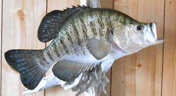 fiberglass reproduction of a crappie