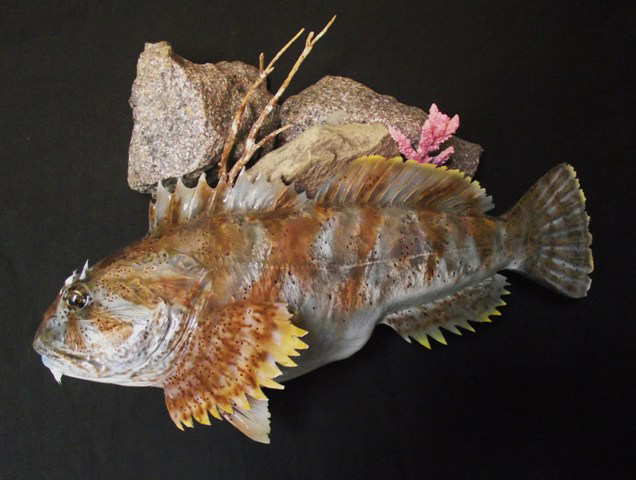 Saltwater fish replicas fiberglass fish replicas for Fiberglass fish replicas
